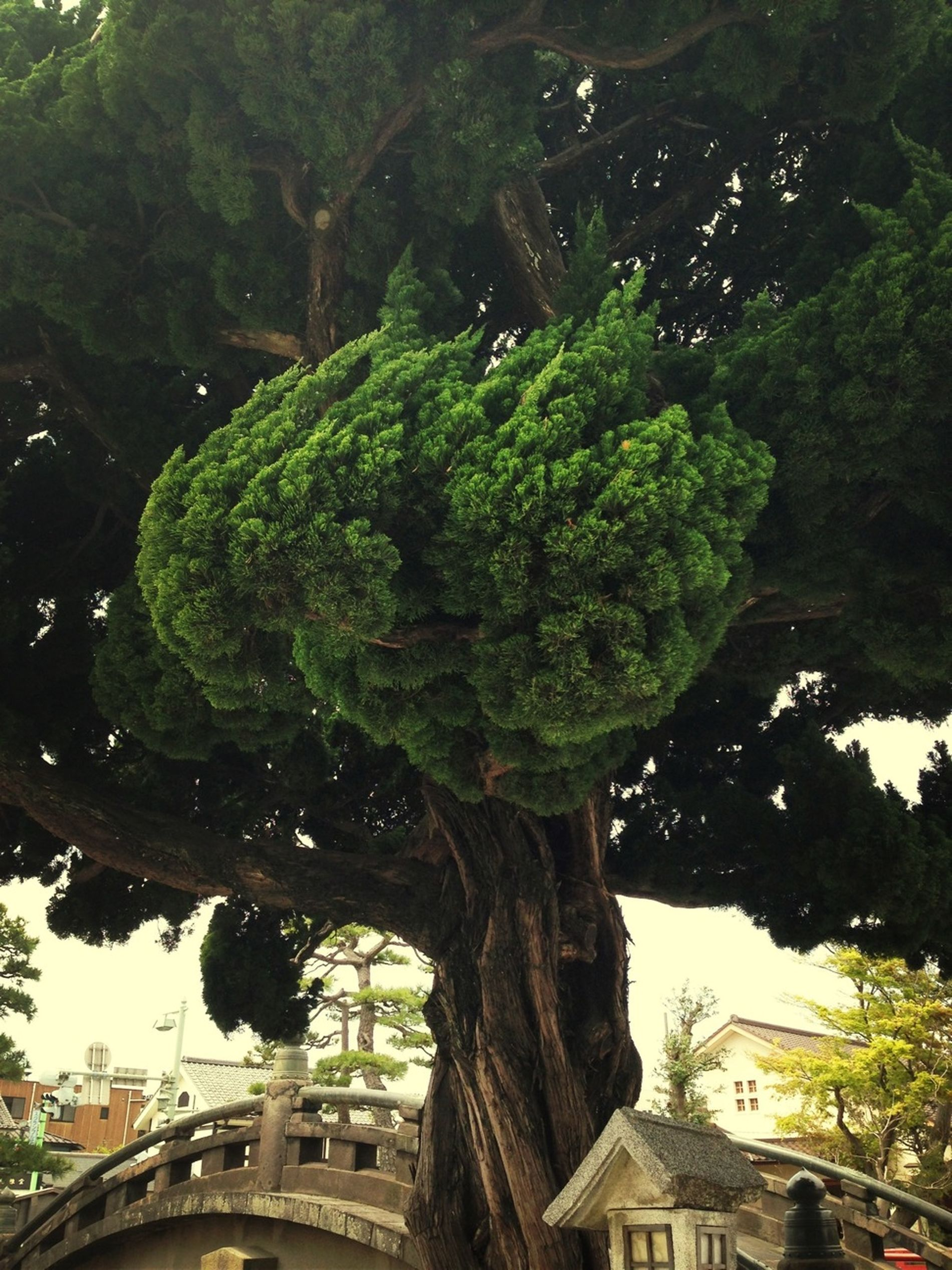 Nature Trees Taking Photos