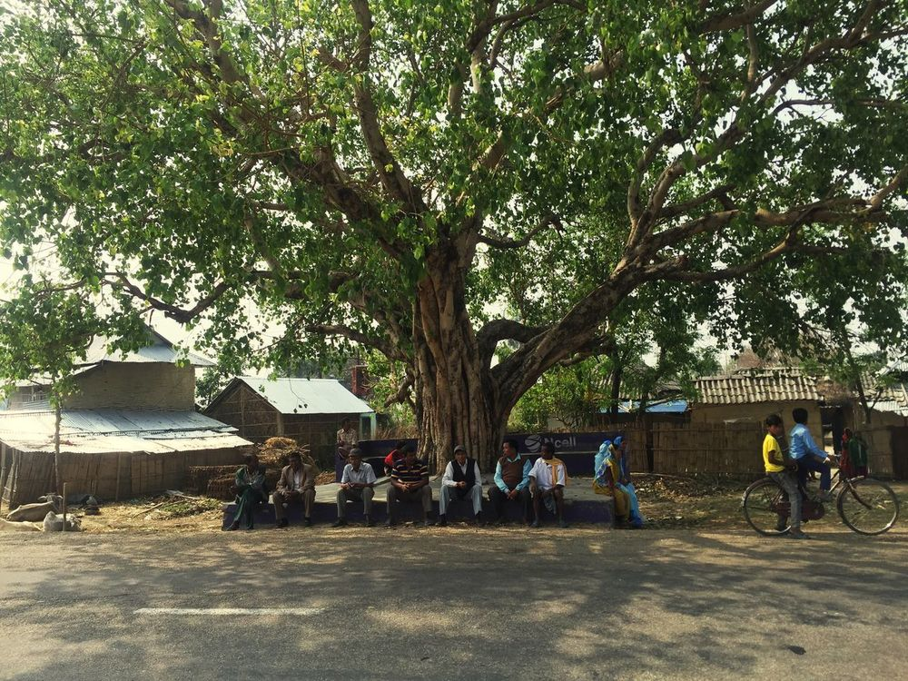 In Summer ☀ many of people gathring under Sacred Fig Tree Peepal Tree by save from Sunlight ☀ and get Fresh Air...