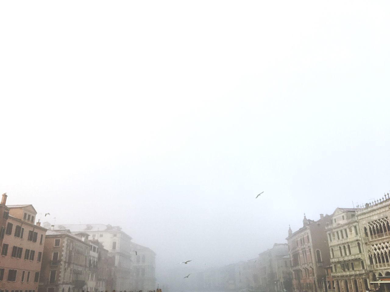Building Exterior City Architecture Built Structure Flying Bird No People Clear Sky Animal Themes Outdoors Sky Day Animals In The Wild Venice Foggy Mystery