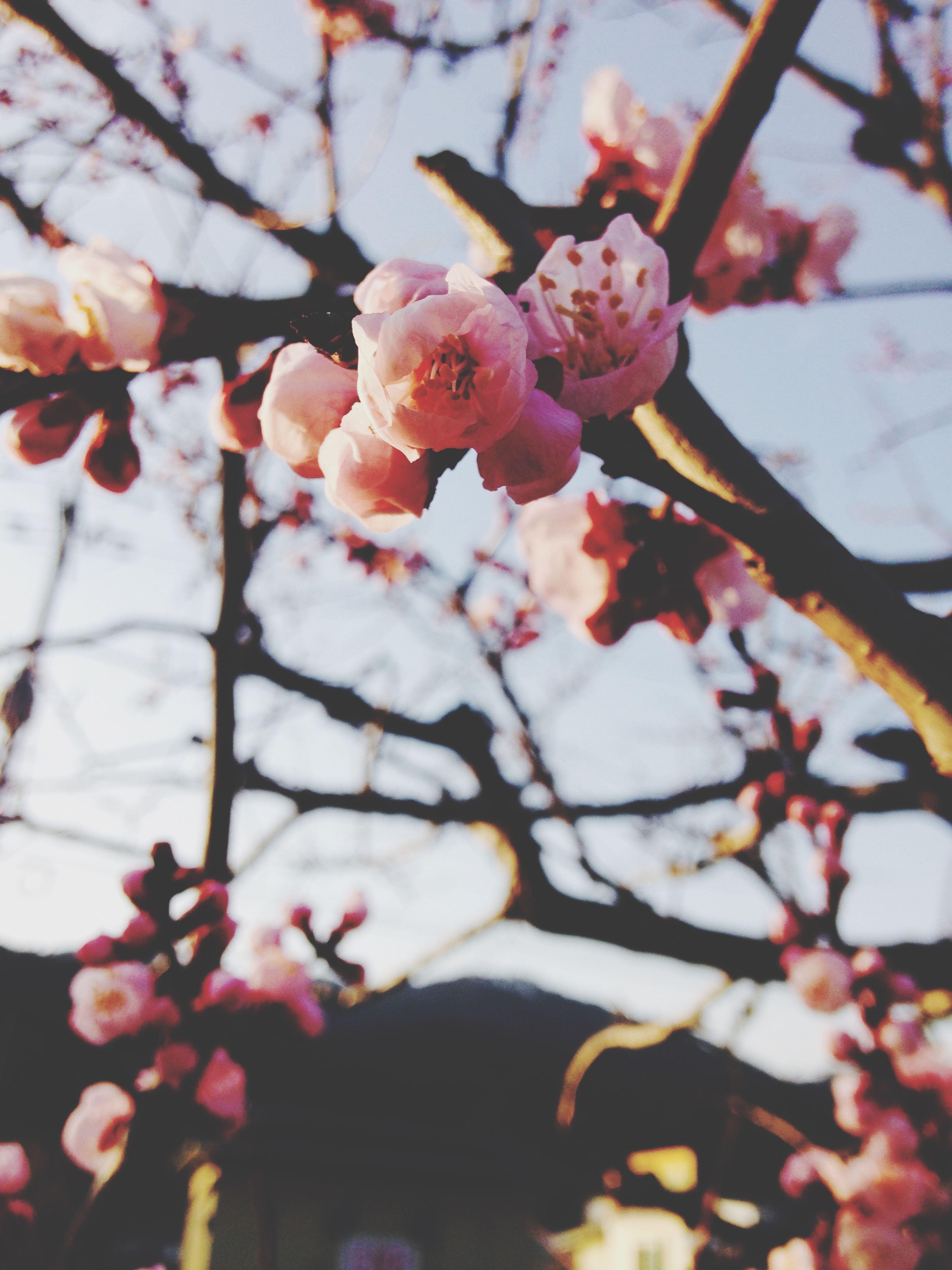 Iohone5 Flower Korea