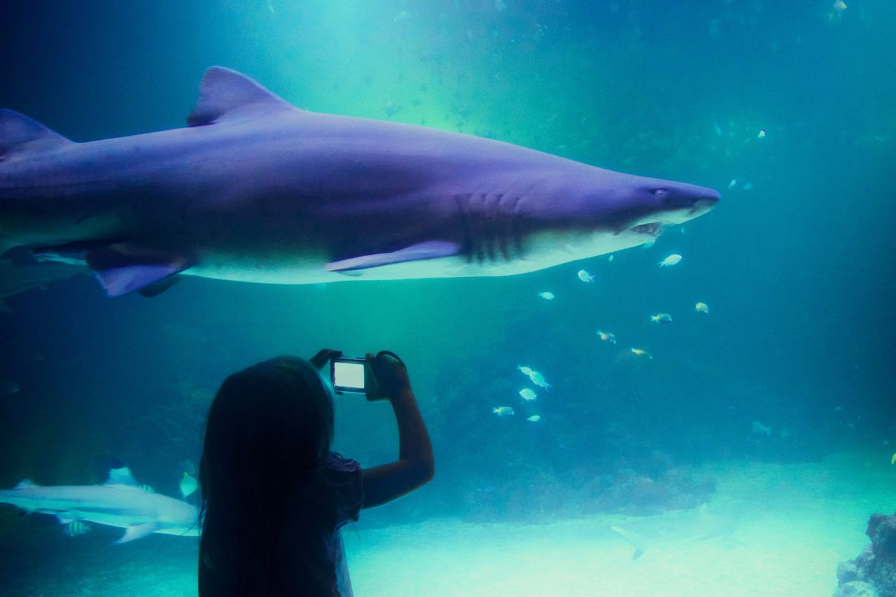 Beautiful stock photos of shark, Animal Themes, Animals In The Wild, Aquarium, Camera