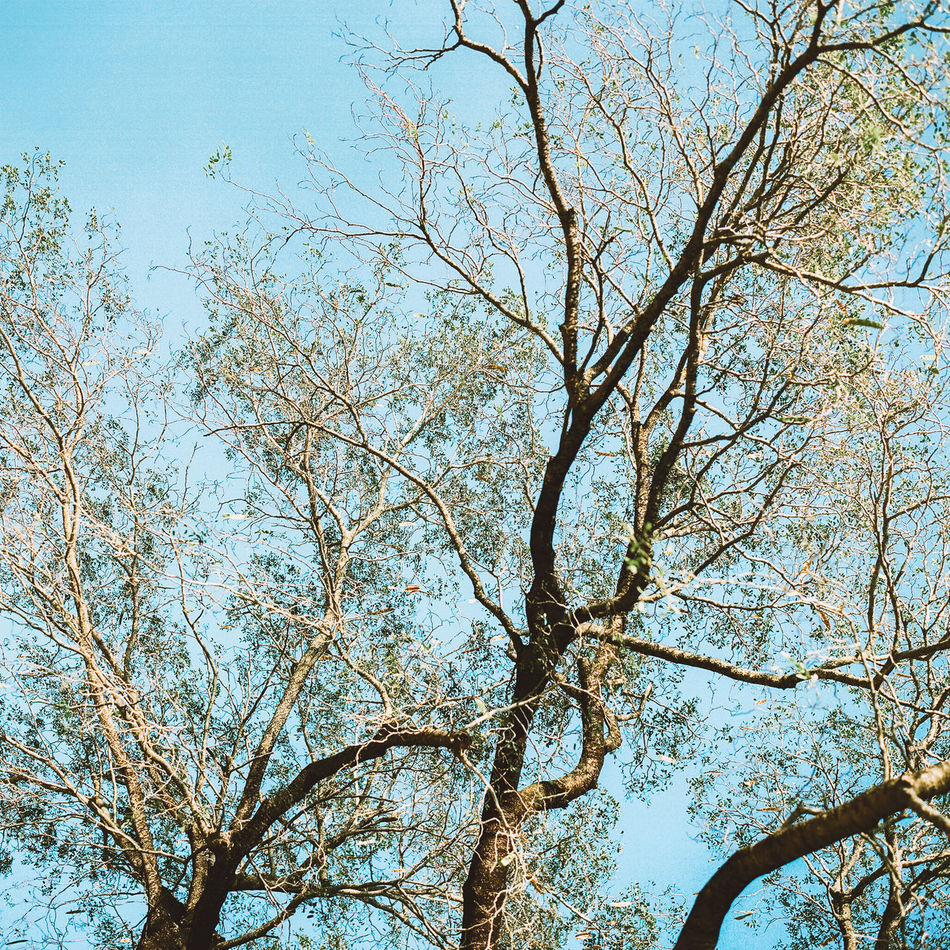 Beauty In Nature Branch Clear Sky Close-up Day Growth Low Angle View Nature No People Outdoors Sky Tranquility Tree