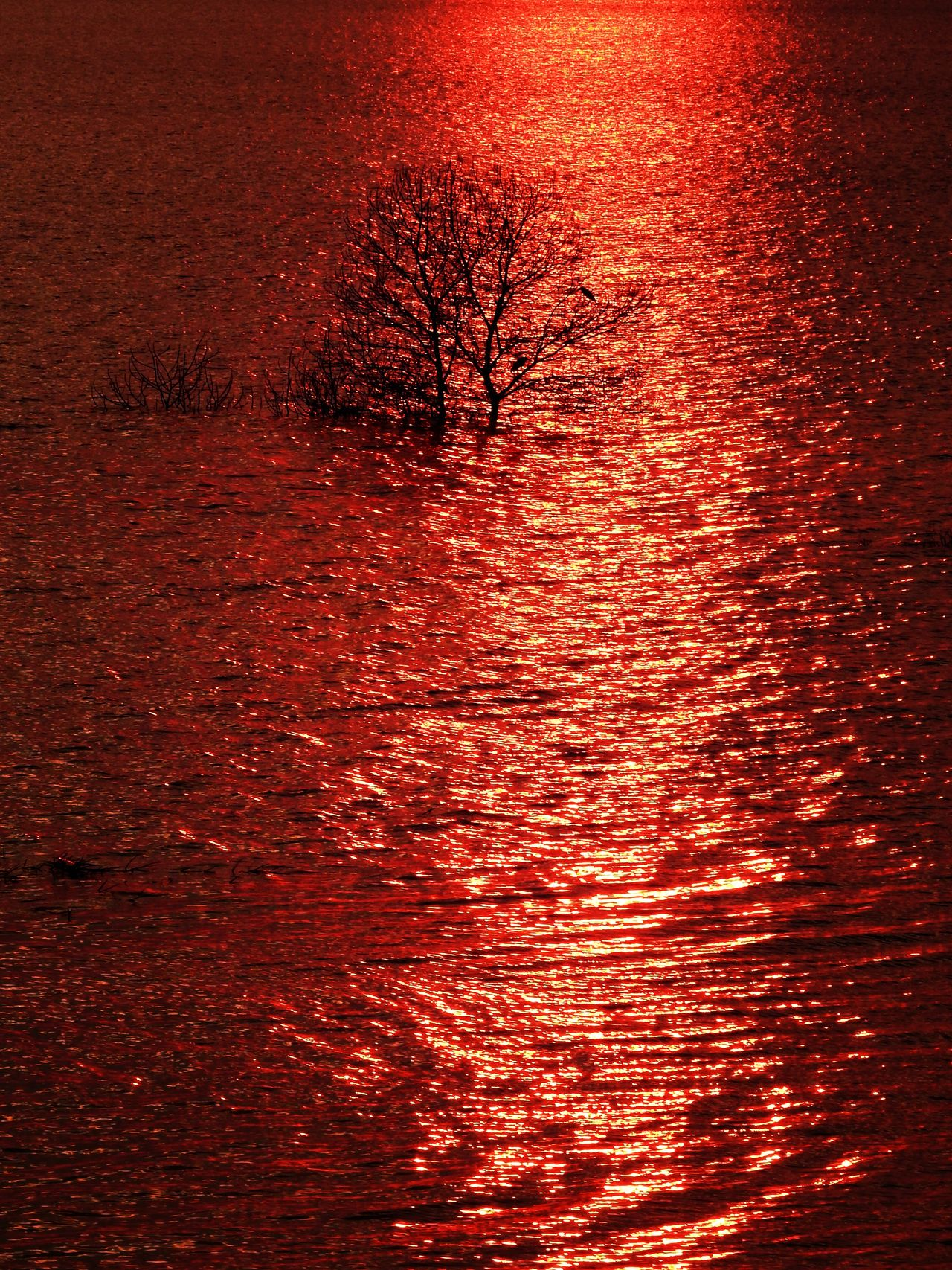 Red Nature No People Sunset Beauty In Nature Tranquil Scene Tranquility Rippled Outdoors Scenics Tree Day