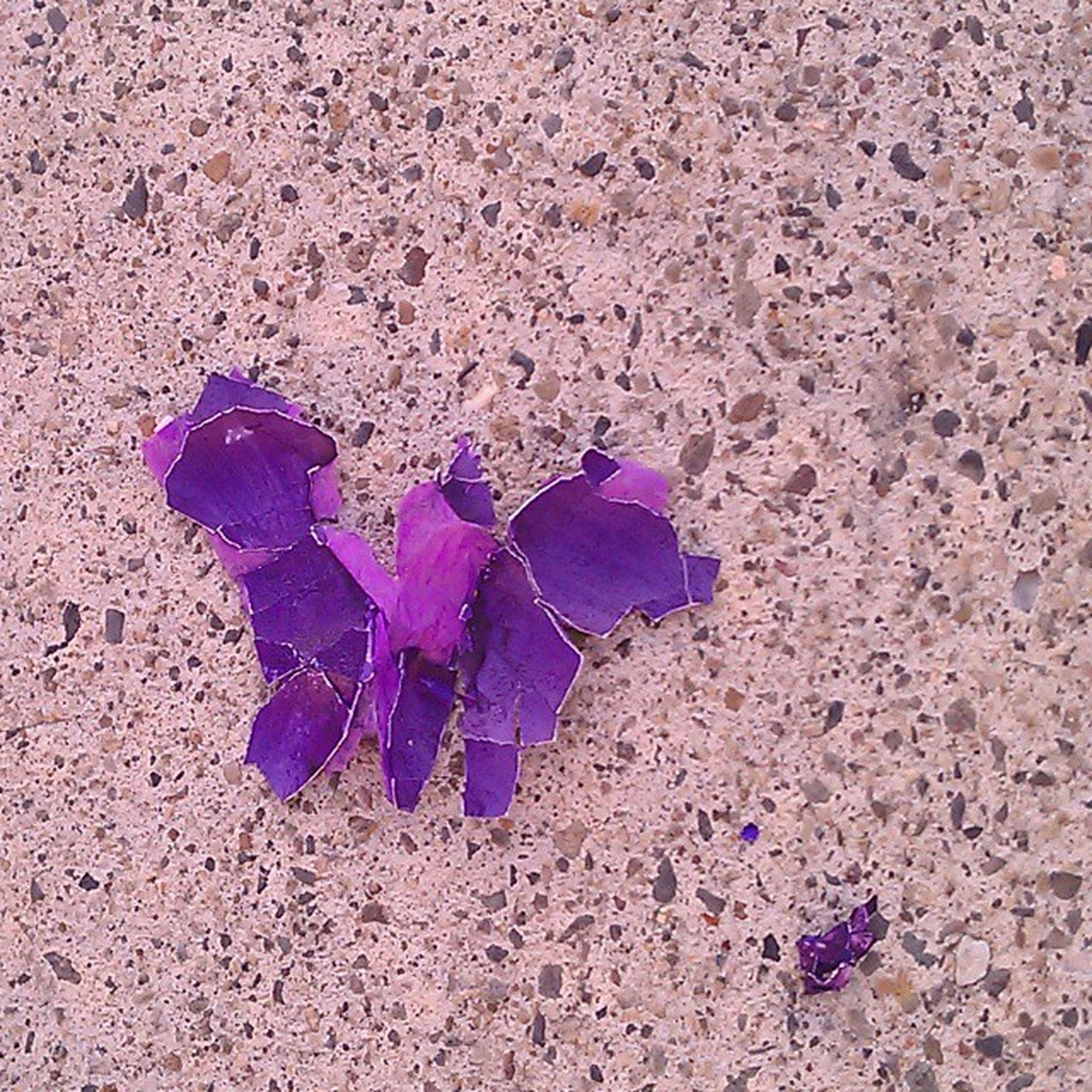 Fallen angel Purpletuesday Minimalism Blossom Beneathyourfeet Flower Nothingisordinary POV Tdj_101
