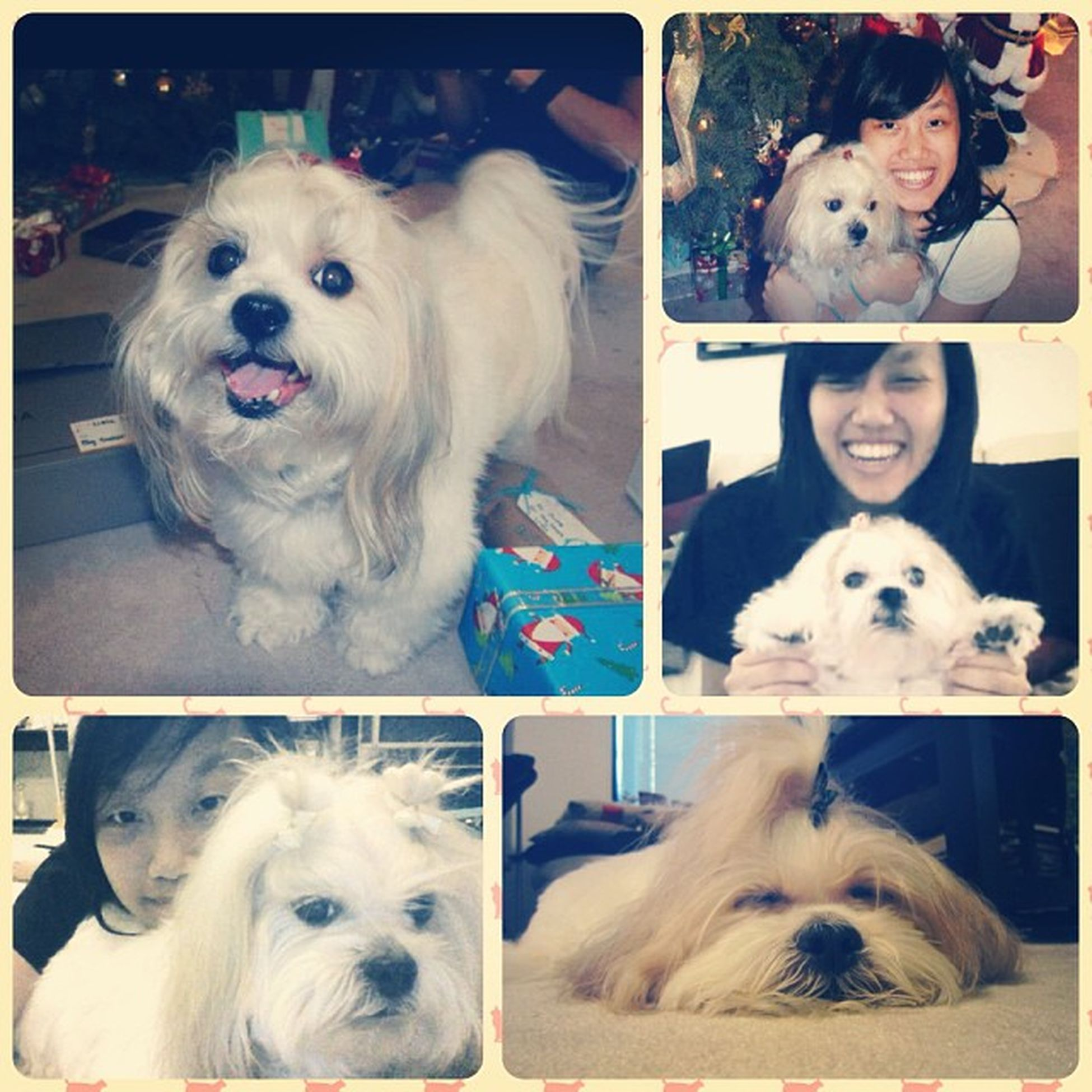 Happy Belated Birthday to the fattest, dumbest, most spoiled dog, Candy. I'll see you soon my baby. ??? Princesscandy Cute Dog Longdistance imissdiswan