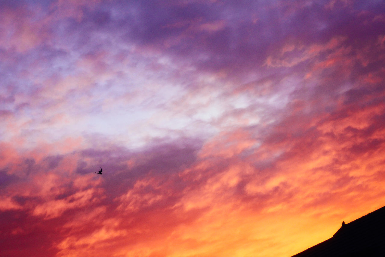 Animal Themes Beauty In Nature Bird Cloud - Sky Day Flying Low Angle View Nature No People Outdoors Silhouette Sky Sunset