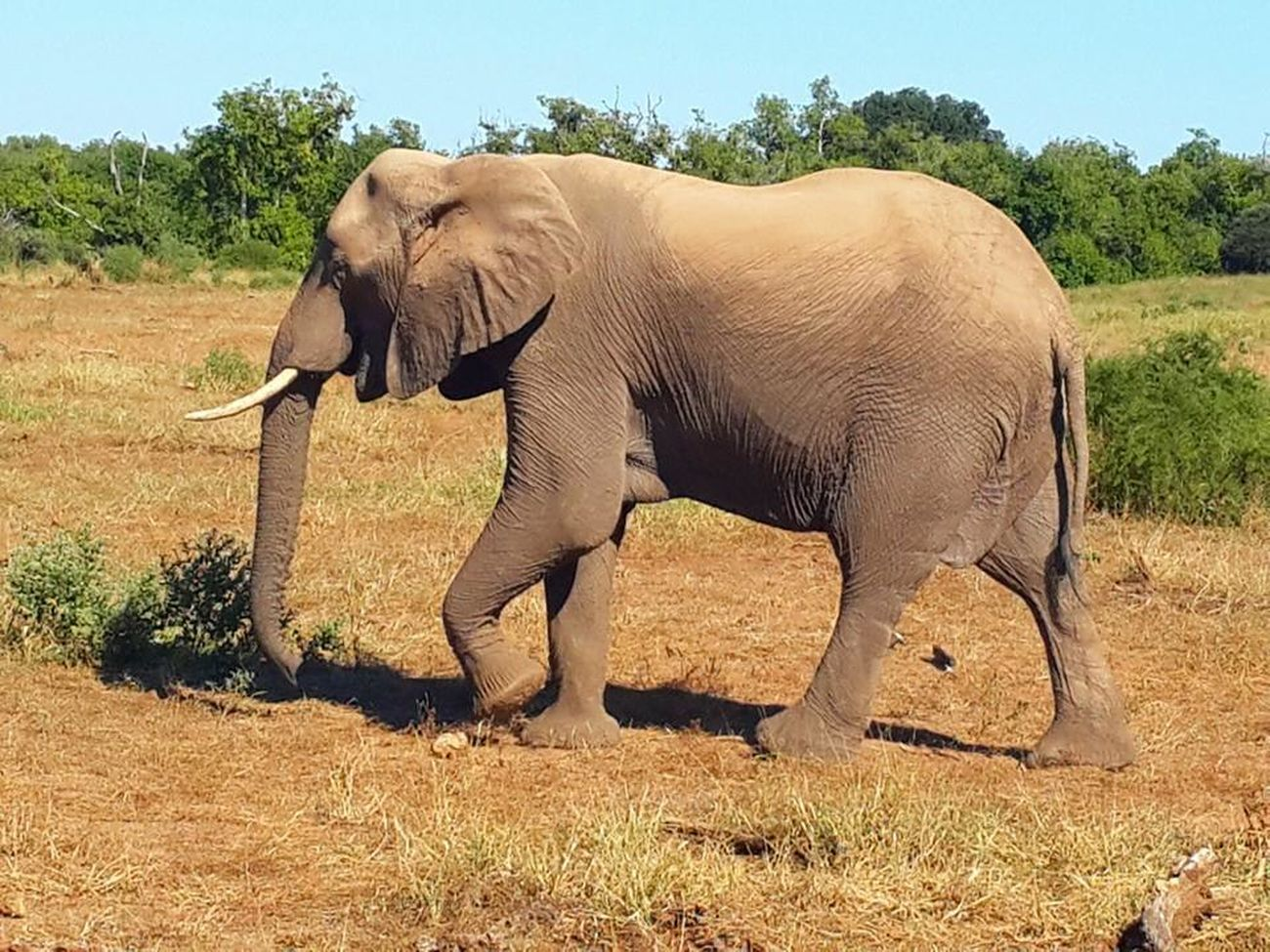 Africa Botswana Elephant Animals