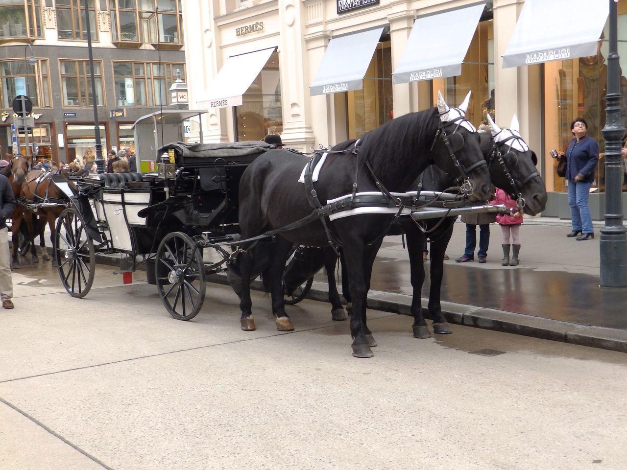 Cab Fiacre Fiaker Horse Mode Of Transport Transportation Two Animals Vienna