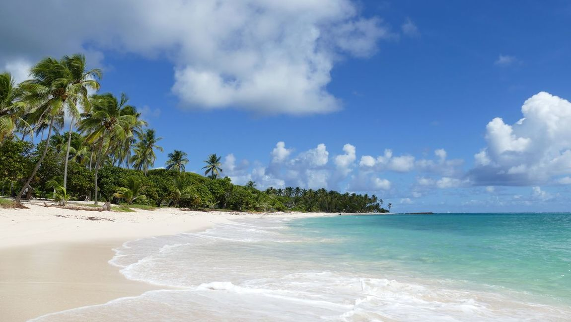 Marie-galante Guadeloupe Antilles Françaises Carribean Island France Beach Water Palm Tree Travel Vacations Sand Nature No People Landscapes Scenics Traveling Outdoors Miles Away Lost In The Landscape