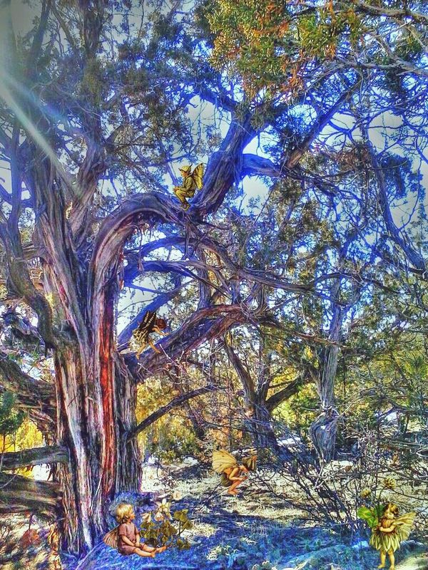 Sunday Fae Playing With Apps  this pic taken & edited on phone, then sent to paintshoppro on computer, then back to phone & leonie filter Ifyougointothewoodstoday.. Stories, Fables & Fairytales
