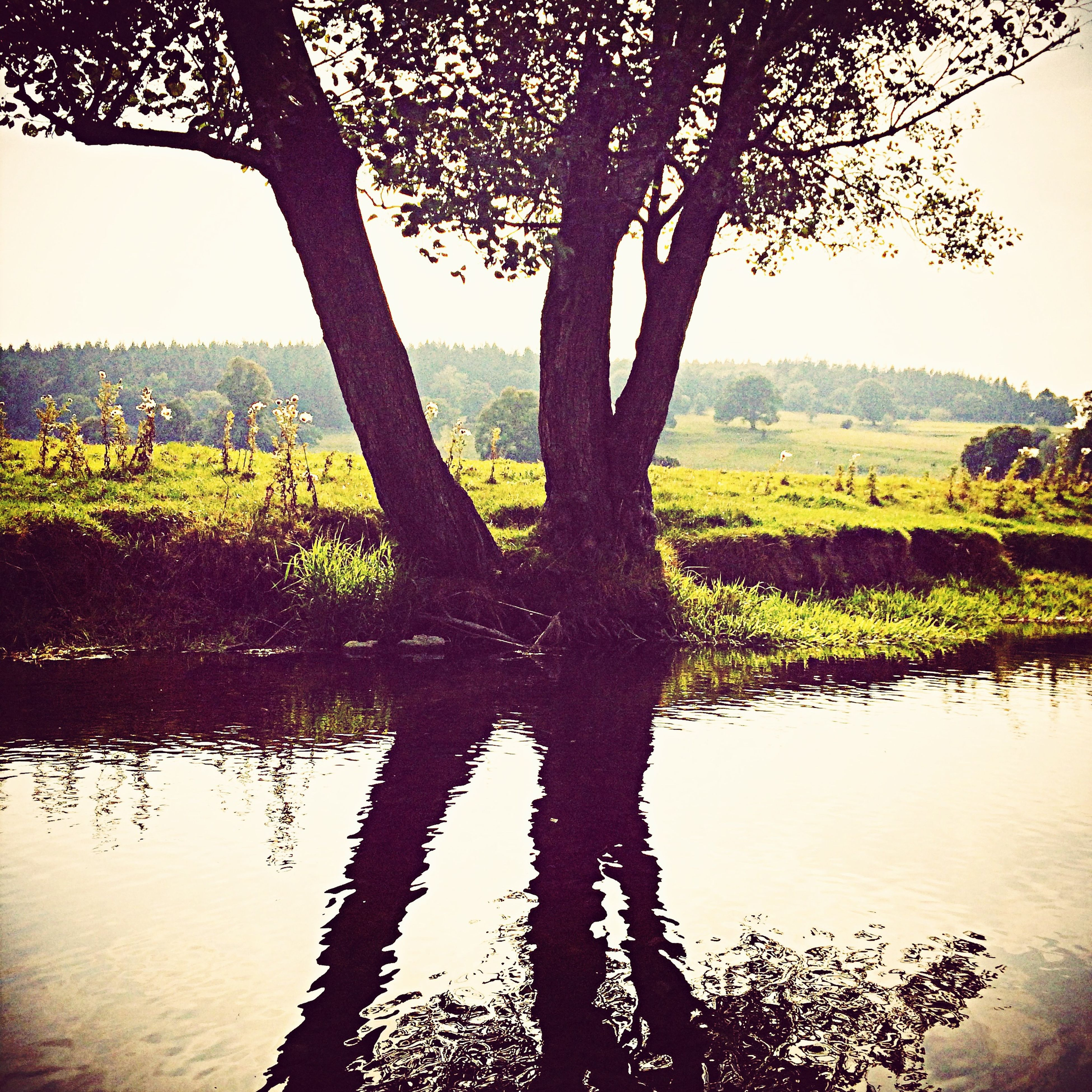 tree, tranquility, tranquil scene, water, lake, scenics, branch, beauty in nature, nature, growth, tree trunk, sky, reflection, idyllic, river, lakeshore, landscape, sunlight, sunset, no people