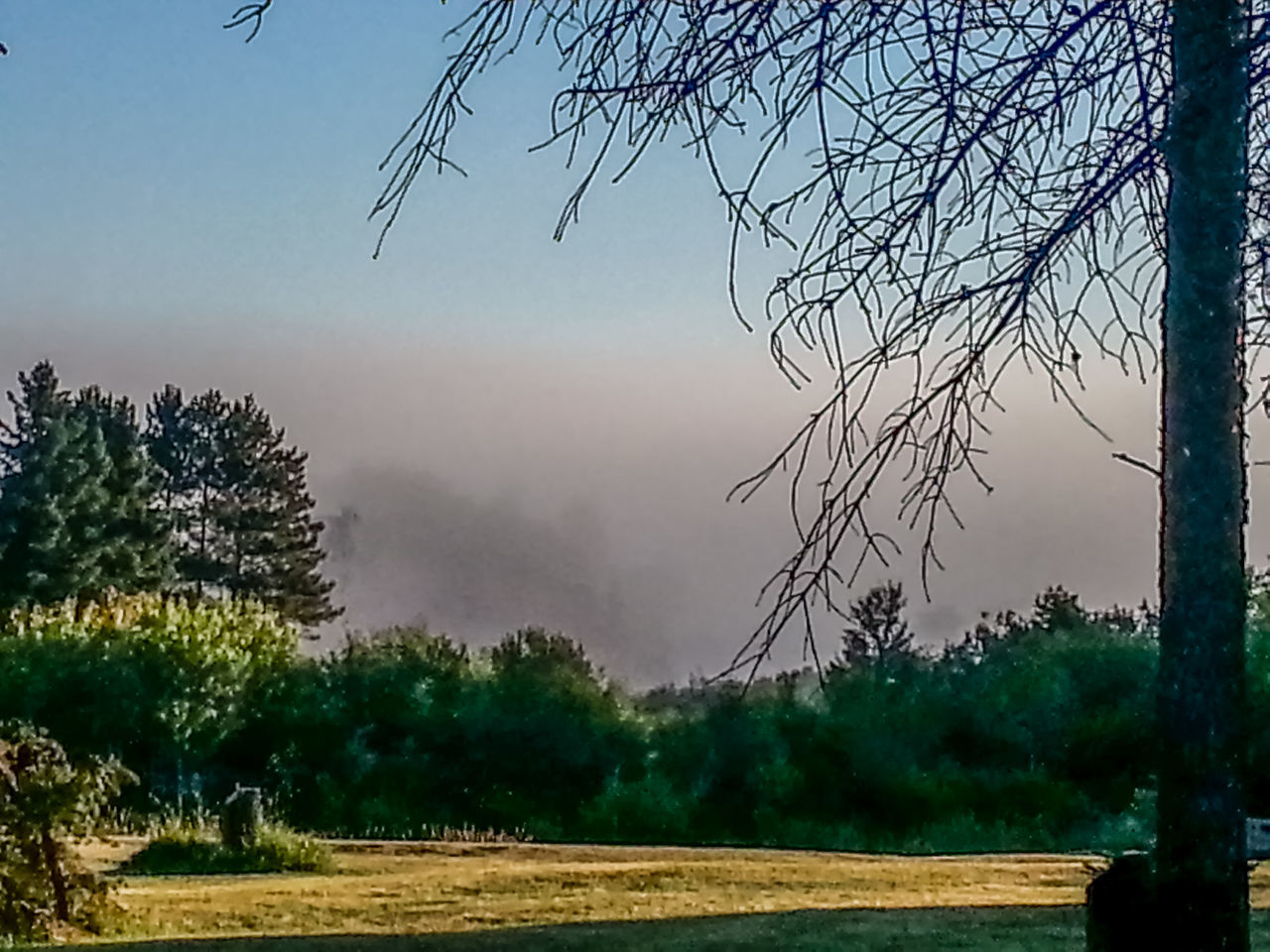 Beauty In Nature Blue Sky And Fog Day Early Morning Fog Foggy Foggy Morning Landscape Mist Misty Morning Morning Light Morning Sky Morning Sun And Fog Nature No People Outdoors Scenics Sky Summer Summertime Sunny Day Sunrise The Week On EyeEm Tree Trees And Sky