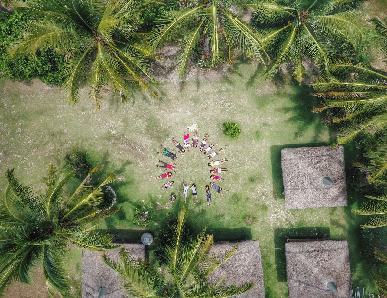 Beautiful stock photos of drones, flower, growth, plant, high angle view