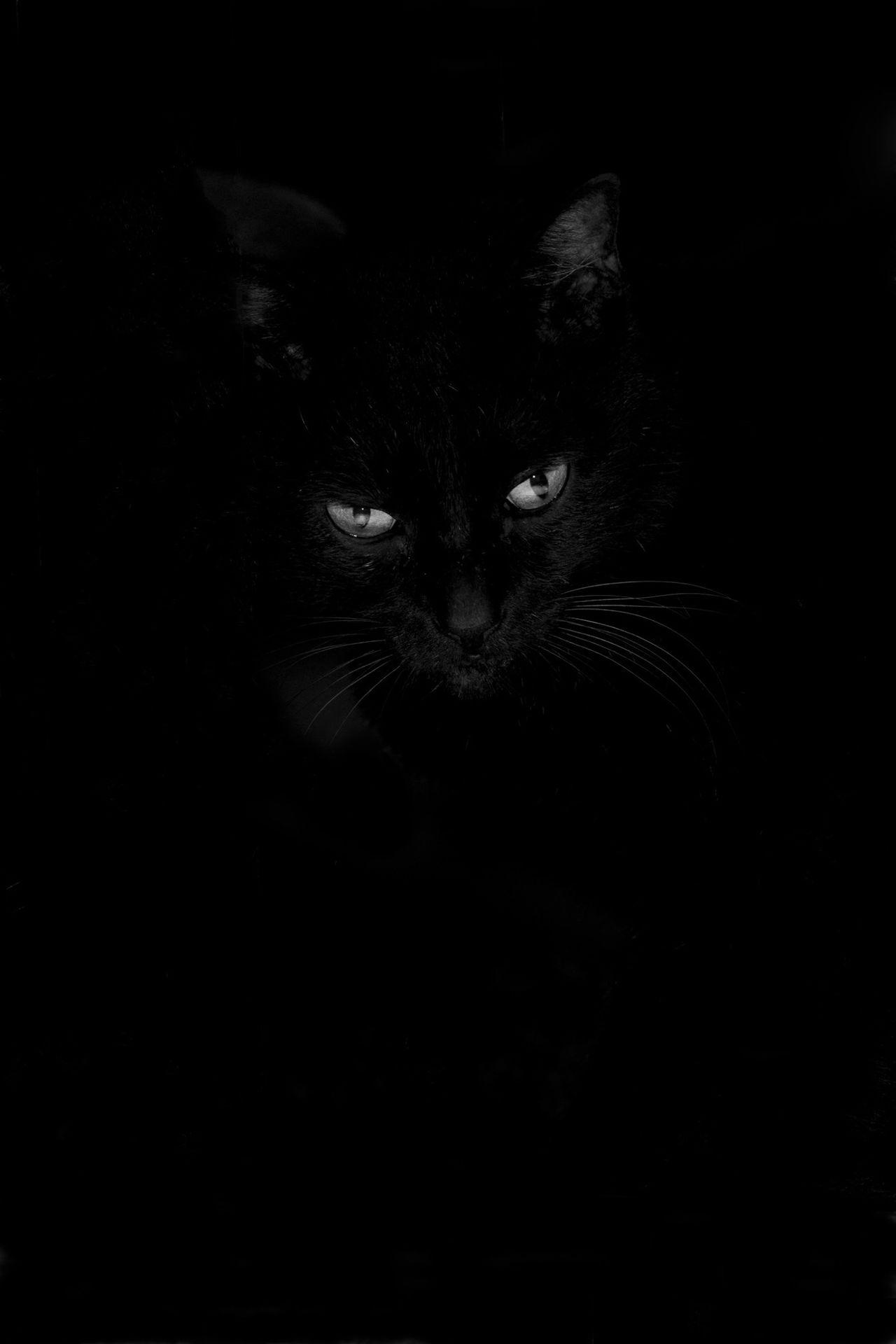 Fairy of night Cat EyeEm Best Shots Black And White Monochrome