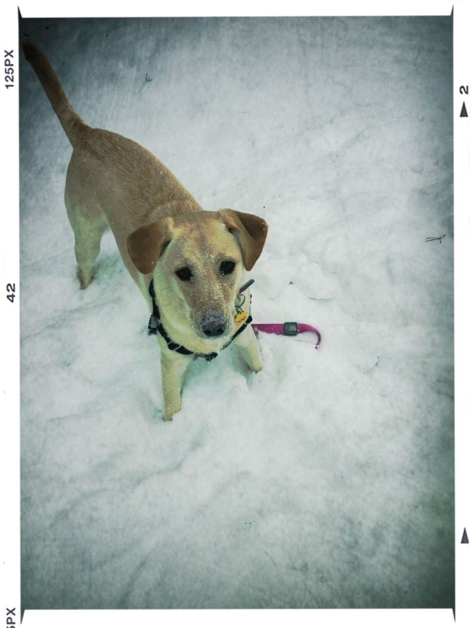 Penny loves the #snow!