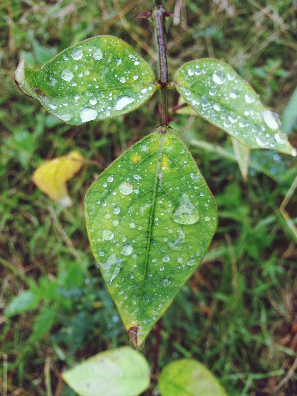 drop, leaf, green color, water, wet, growth, close-up, nature, day, raindrop, no people, focus on foreground, outdoors, plant, freshness, beauty in nature, fragility
