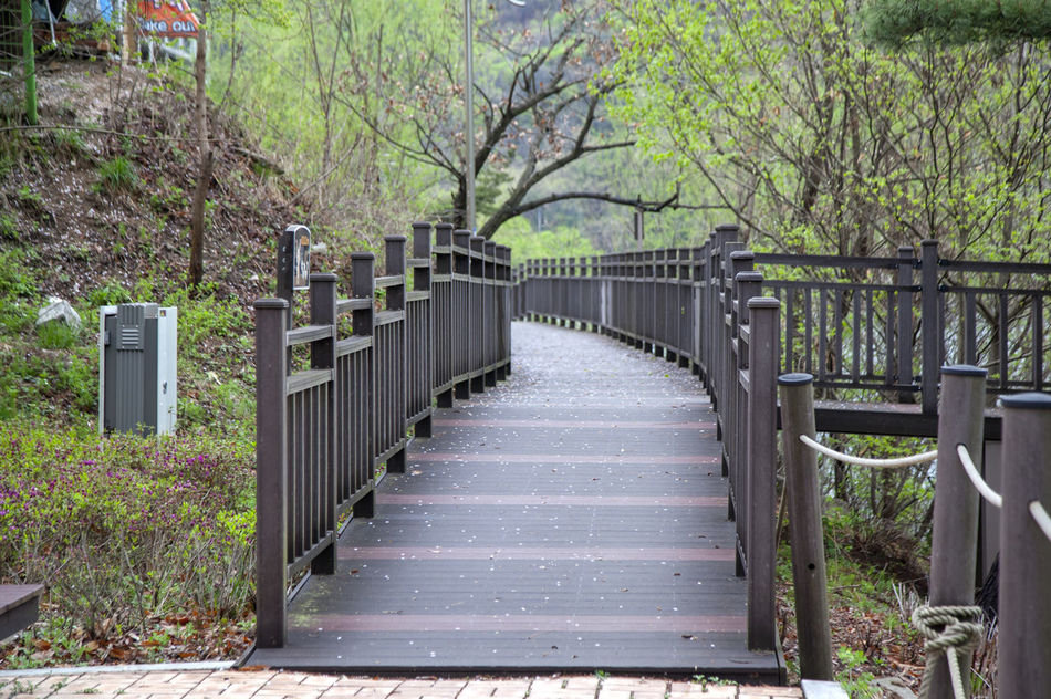 Absence Beauty In Nature Day Diminishing Perspective Empty Fence Fences Footbridge Green Color Growth Narrow Nature No People Outdoors Plant The Way Forward Tranquil Scene Tranquility Tree Vanishing Point Walkway Walkwaywhy Wooden