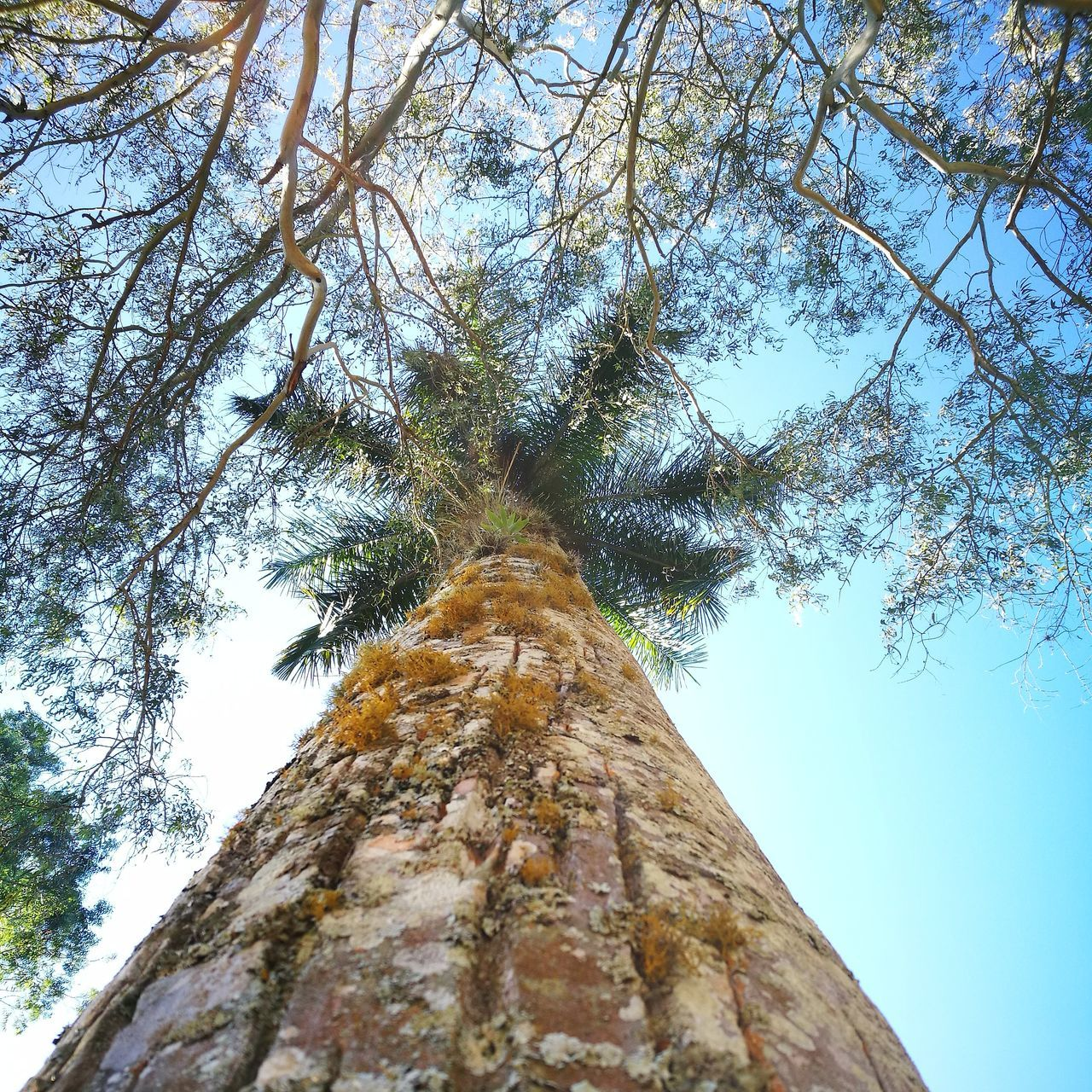 915 Tree Nature Low Angle View Sky Beauty In Nature Growth No People Sunlight Directly Below Outdoors Tree Trunk Scenics Clear Sky Day Close-up