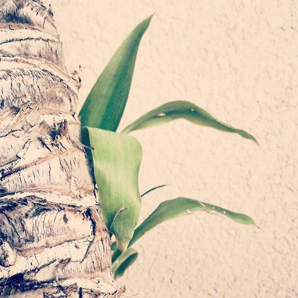 🌿💚 Plants Nature Naturelovers Photooftheday Naturelover Nature_perfection Instanature Top Instagood Instalife Naturegram Greenplant Green Garden Coulorpicture Picoftheday Morning Dailyphoto Bestpicture Bestoftheday Colour Colourpic Art Bestart Instanature natureaddict nature_shooters nature_shooter lights love_natura lovenature