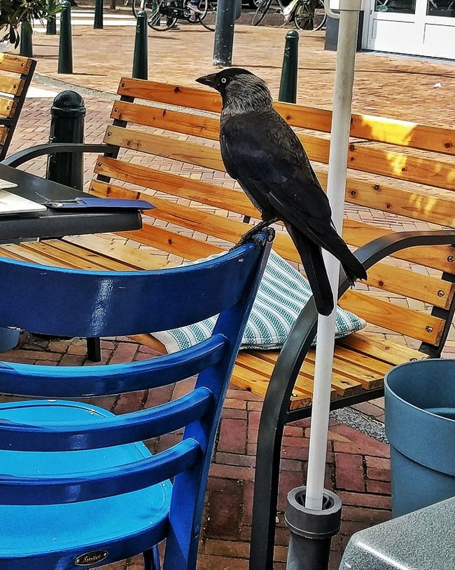 Picking Order Bird Black Bird Crow Just Sitting Just Hanging Out Just Hanging Out.