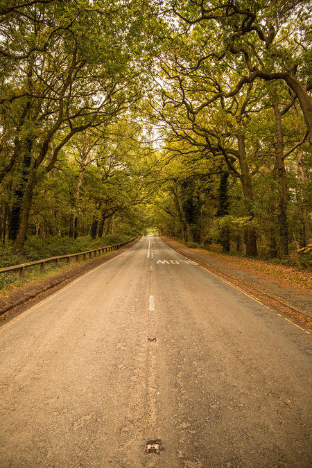 Beauty In Nature Branch Diminishing Perspective Forest Nature No People Outdoors Road Scenics Straight The Way Forward Transportation Tree