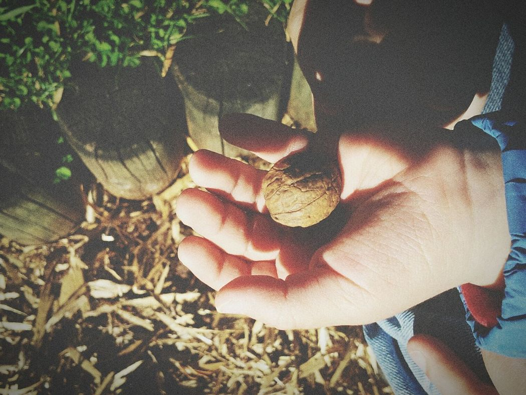 Nature My Litle Baby Nuts Little Hand