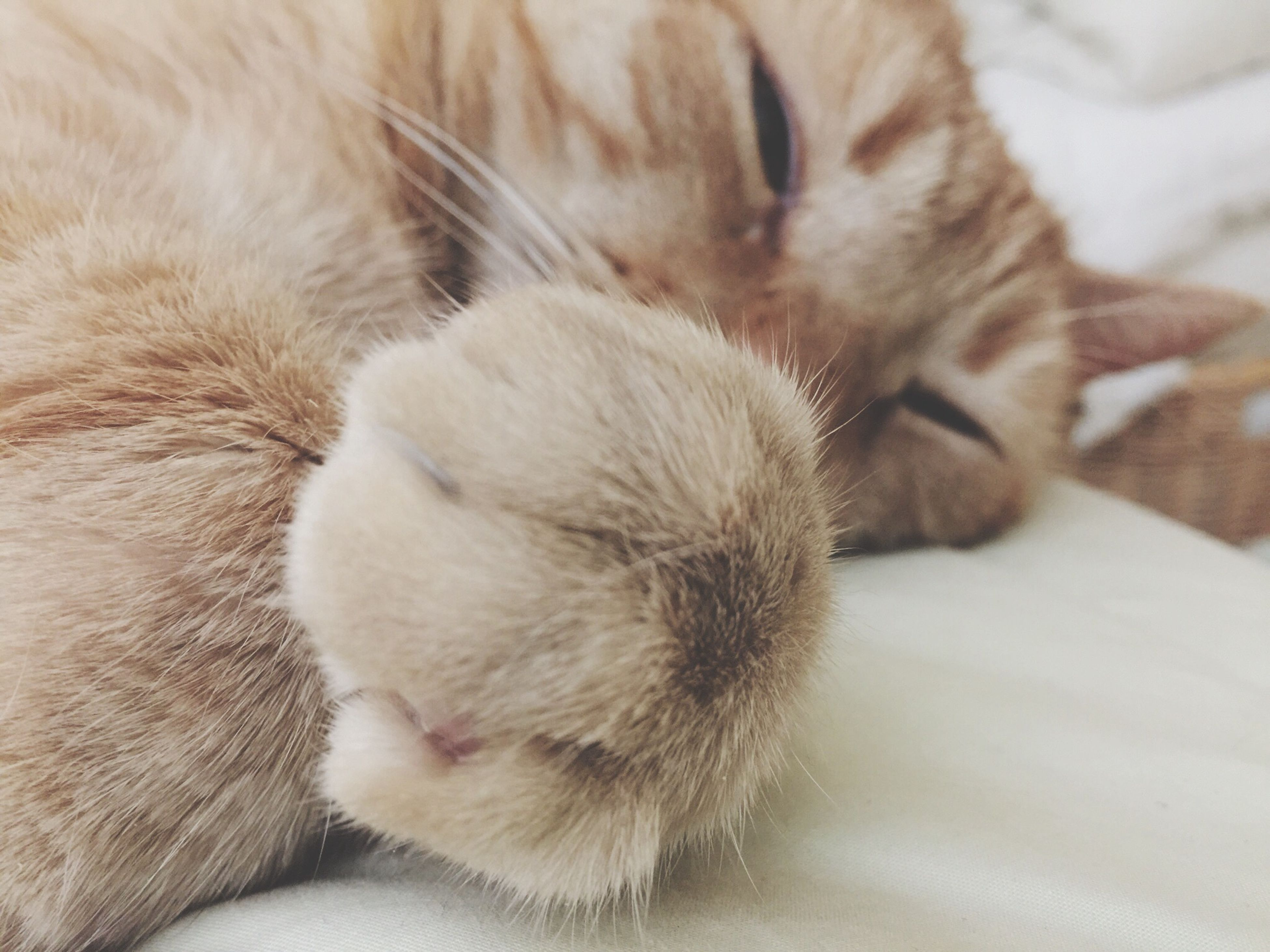 pets, domestic animals, indoors, animal themes, domestic cat, mammal, one animal, cat, sleeping, relaxation, feline, resting, lying down, whisker, close-up, eyes closed, bed, home interior, comfortable, home