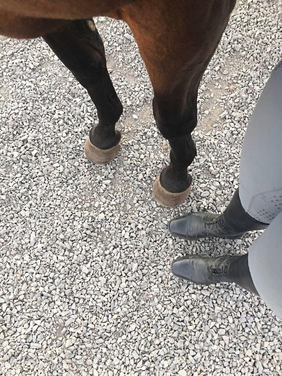 Horse Boots Riding Feet Italianleather Hoof