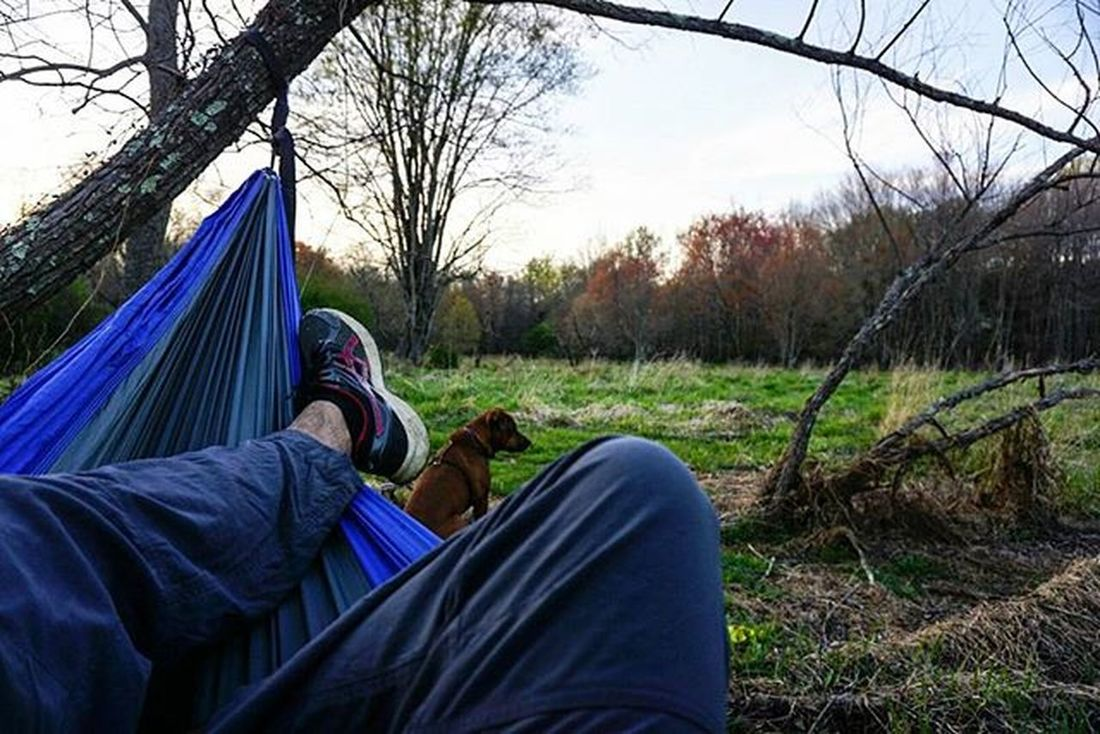 Hanging out on trees! . . . . Hammock Lola Sunset Sunsetporn Sunset_hub Hammocklife A6000 Sonya6000 Hangingout Adventures Clymblife Besomebody Besomedoggy Trees Hammocktime Puppy Rhodesianridgeback Pitbull Wonderful_places Nature Neverstopexploring  Findyourhappyplace The Great Outdoors With Adobe