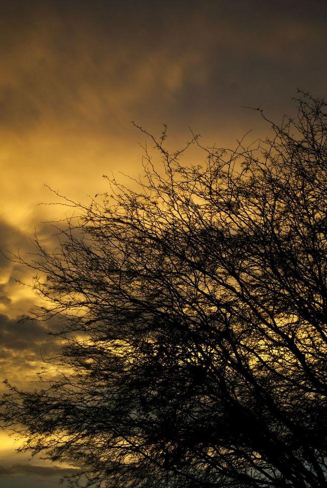 Sunset Sillouette Paradise