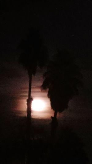 Moon Palmtrees Night Darkness
