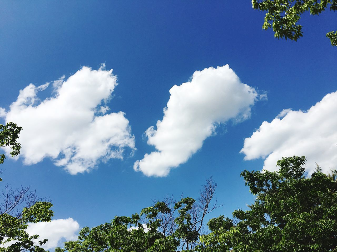 Clouds And Sky Nature Some Trees Skyblue Blue Sky The weather is nice