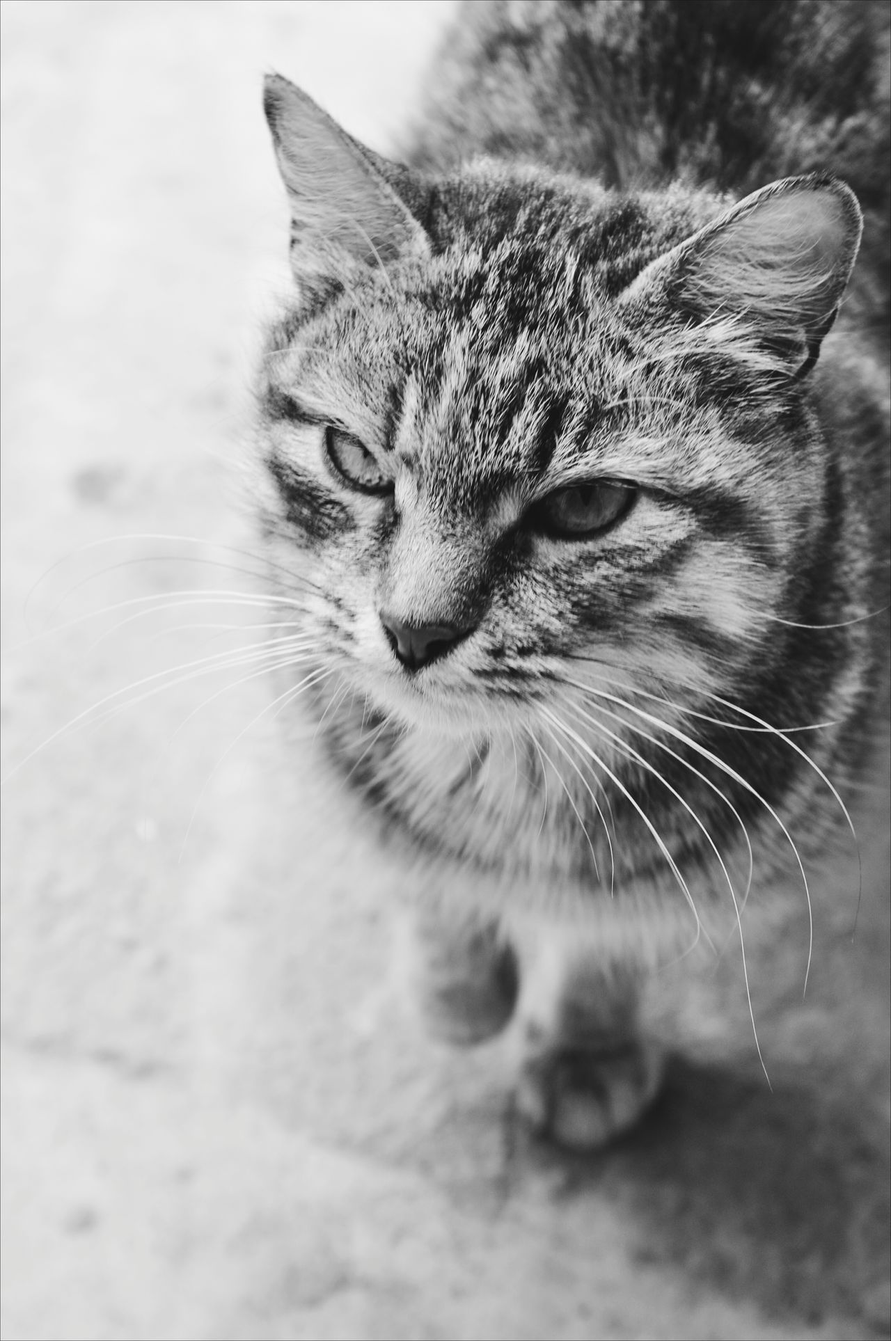 Animal Themes Blackandwhite Blackandwhite Photography Cat Close-up Day Domestic Animals Domestic Cat EyeEm Best Shots Indoors  Mammal No People One Animal Pets The Week Of Eyeem