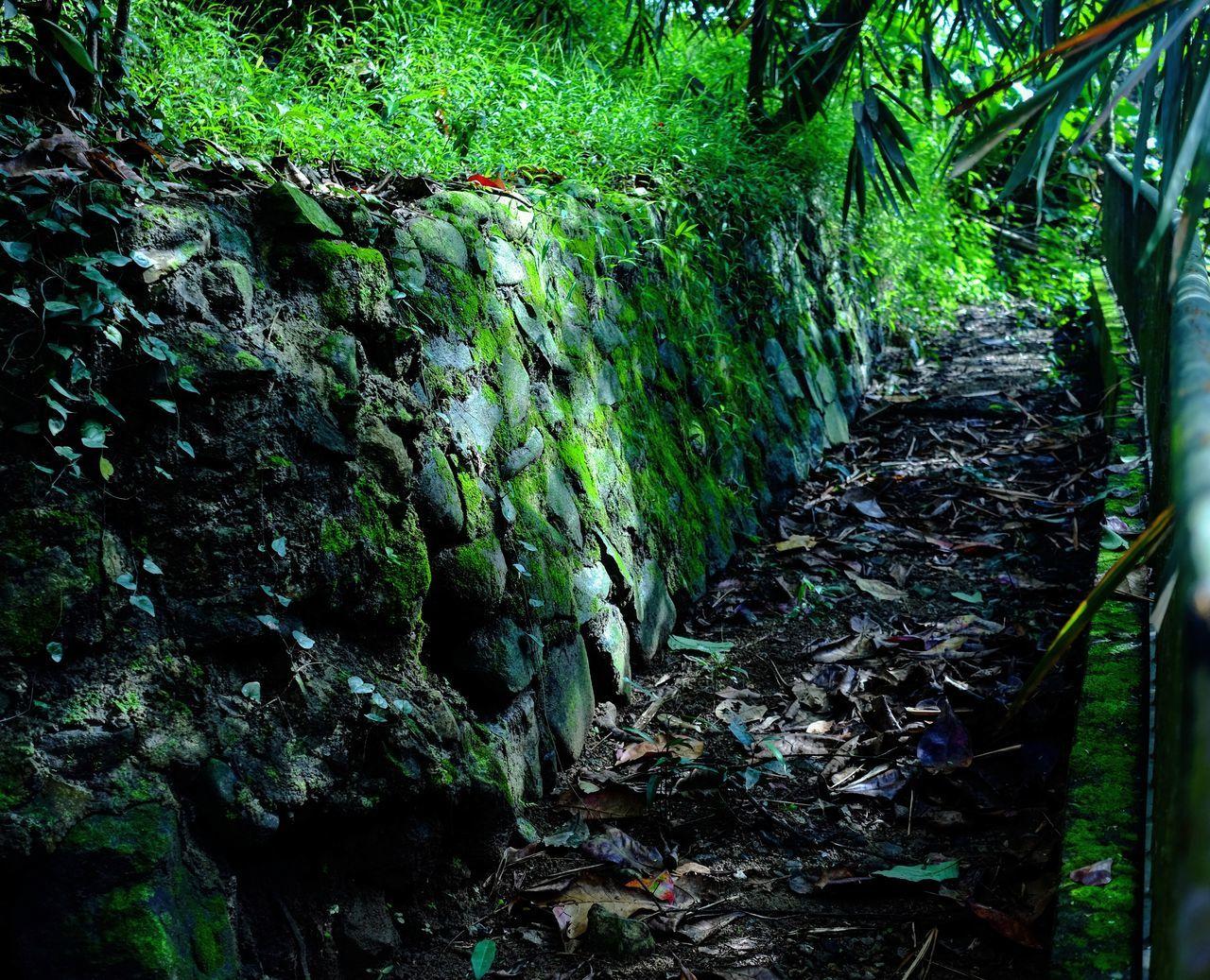 Green Color Green Grass Path Pathway Antipolo Touchofglory Rizal Philippines Prayermountain