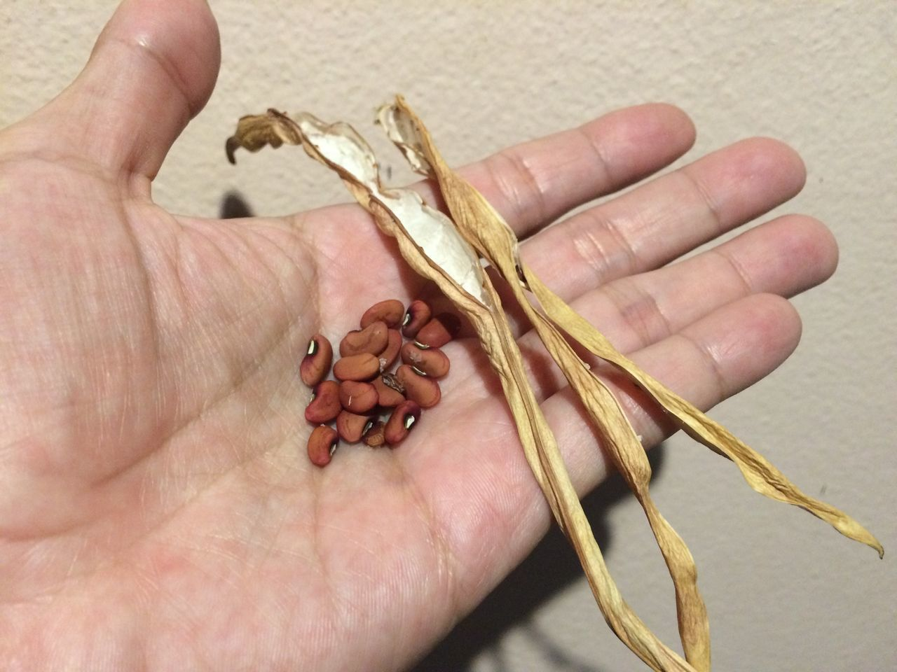 Cropped Image Of Person Holding Cowpeas