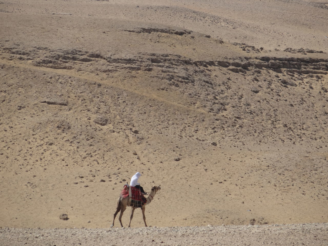Animal Themes Arid Climate Camel Day Desert Domestic Animals Full Length Horse Landscape Livestock Mammal Nature One Animal One Person Outdoors People Pets Real People Riding Sand Working Animal