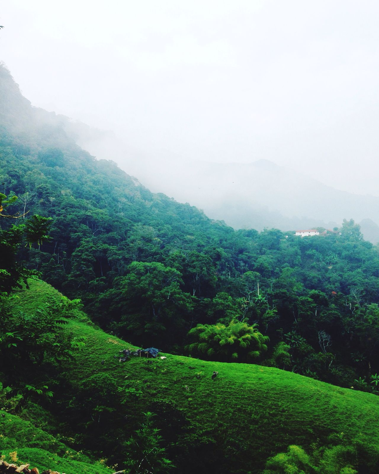 Mountains of Minca 🌴🇨🇴 Nature Lush Foliage Tranquility Landscape Mountain Scenics Beauty In Nature