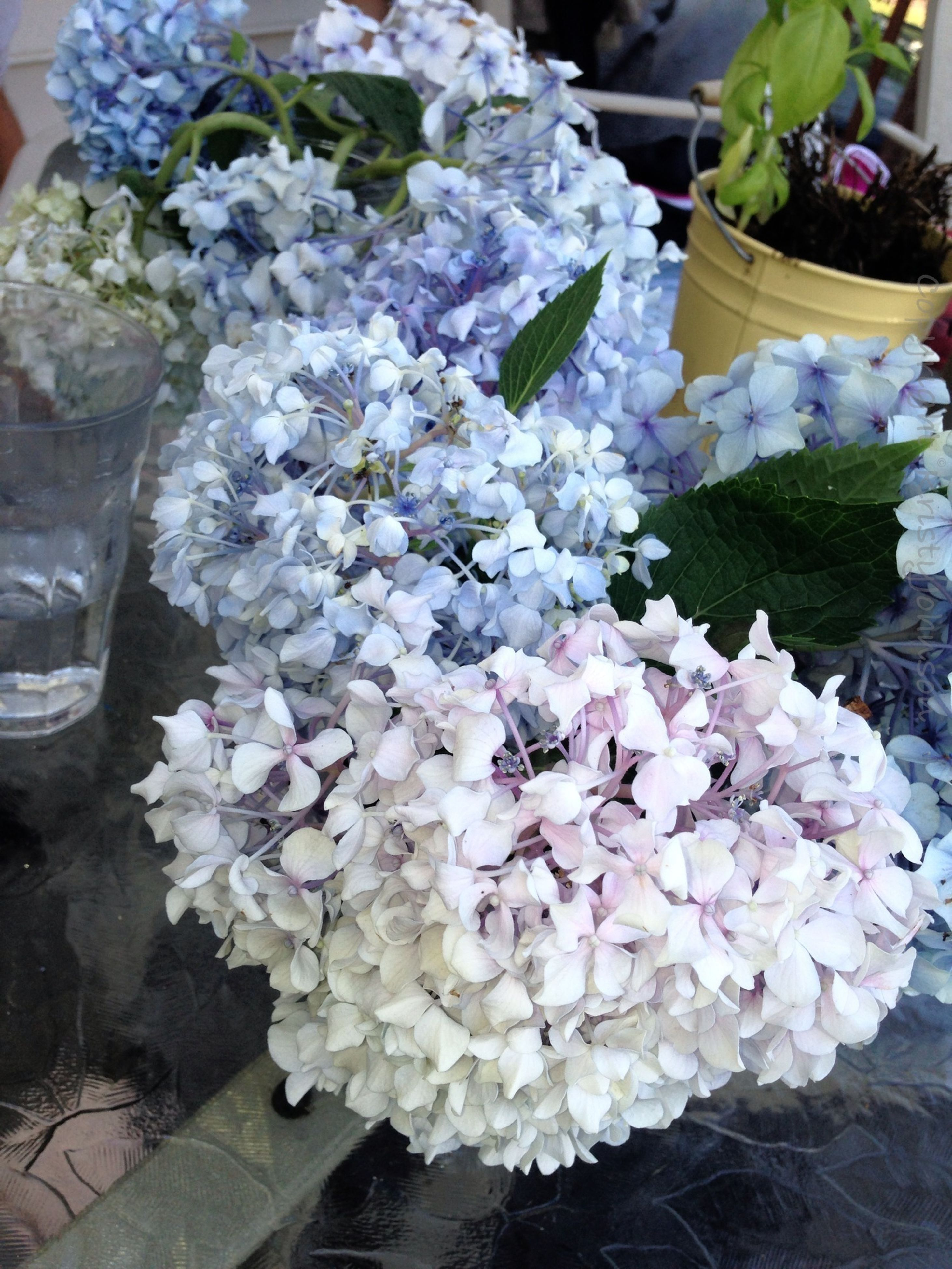 flower, freshness, fragility, petal, bouquet, bunch of flowers, flower head, beauty in nature, indoors, high angle view, for sale, variation, close-up, growth, flower arrangement, nature, pink color, plant, vase, abundance