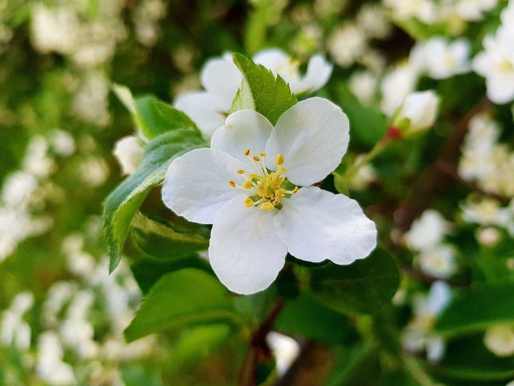 🌼 Flower Petal Nature Beauty In Nature Flower Head Fragility Close-up Freshness White Color Plant Growth Day No People Outdoors Leaf Springtime EyeEmNewHere Beauty In Nature Nature Beautiful Sunlight 🌿☘️🌲🍃 Close Up
