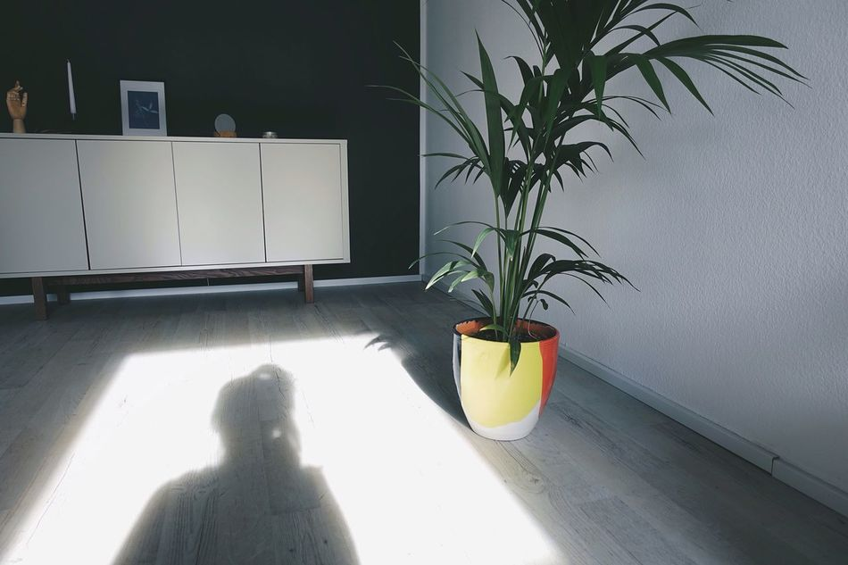 Morning Morning Light Window Spring Springtime Potted Plant Indoors  Home Interior Plant Leaf Leaves Daylight Shadow One Person Sunny Modern Minimalism Lifestyles Life Light And Shadow Minimal Style Self Portrait Sunshine Sunlight TCPM Art Is Everywhere Break The Mold