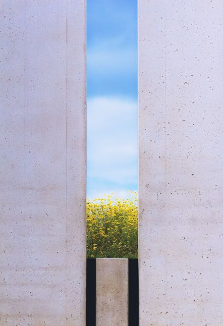 Architecture Urban Geometry Wall Breach Close-up Concrete Day Flowers Gap Grass Nature No People Outdoors Plant Sky Urban Vegetables Yellow