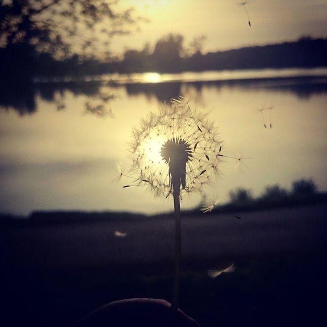 """""""Nie opłaca się oszczędzać czasu, bo choć nie wiem jak bylibyśmy skrupulatni, na koniec i tak nic nam nie zostanie..."""" """"Fotografia stanowi dokument zanurzenia ludzi w czasie..."""" Ulotnie Refleksje Wspomnienia Kochamżycie Uwielbiam Nature Dmuchawiec Jezioro Chwila Relaksu CarpeDiem  żyćchwilą Co Zostanie Czas Zawalczyć Czas Kochać I Byc Kochanym Instagood Instadialy Instaphoto Miłość przyjaźń wiara szczęście EwaJoannaMatczyńskaPhotography Podziękowania za pomoc dla @suuupeer_blondynka!"""