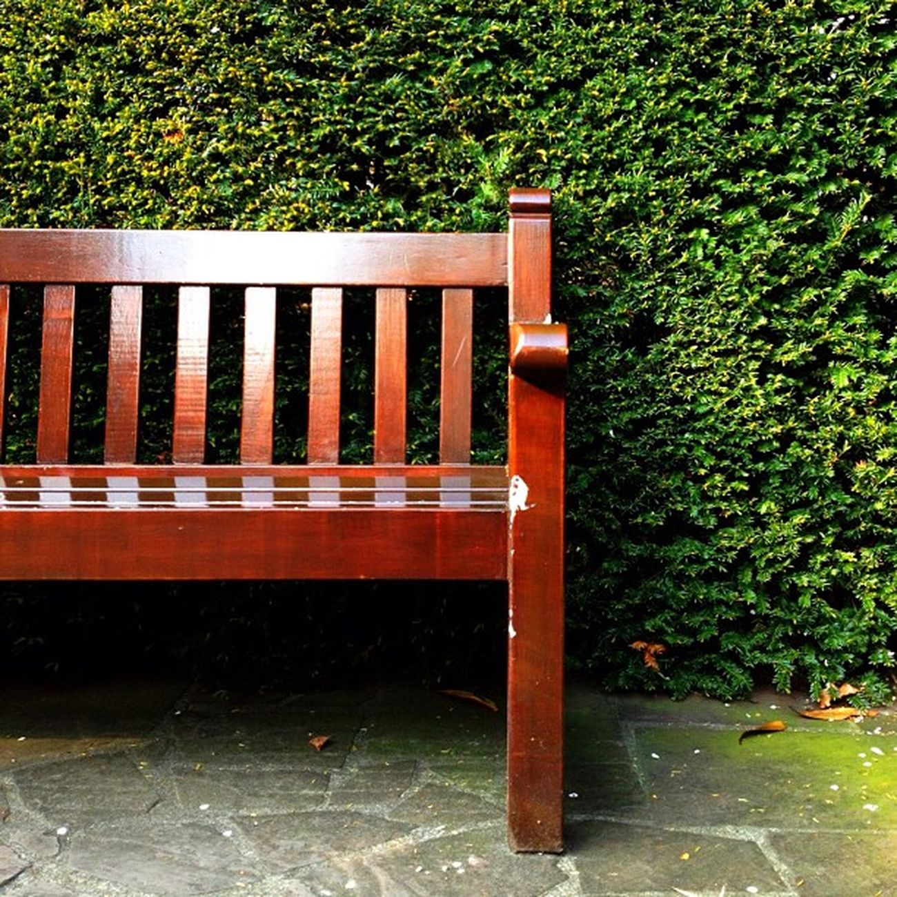 Bench #park #jj #dutch #jj_forum #ubiquography #holland #keukenhof Holland Park Dutch Jj  Keukenhof Jj_forum Ubiquography