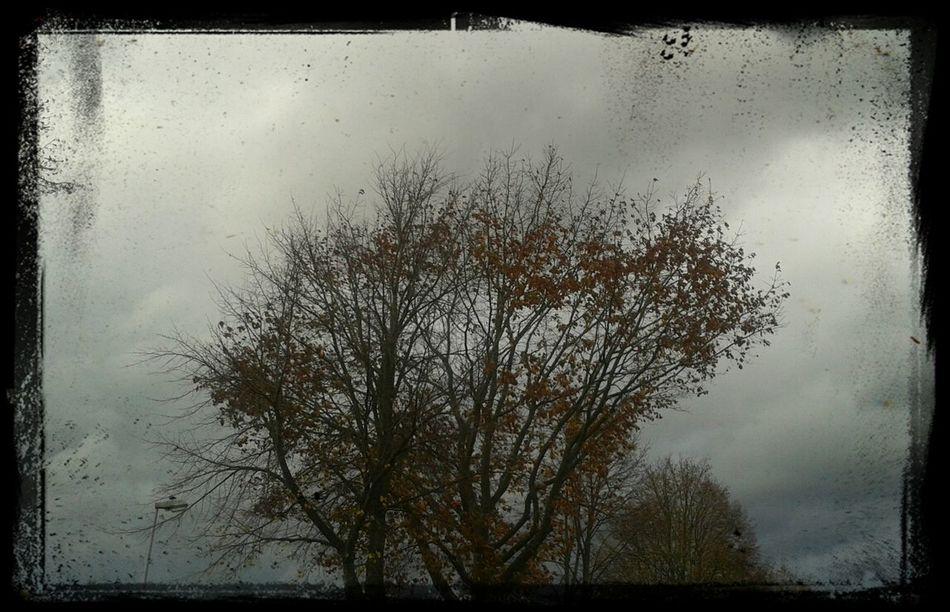 Sturm über dem Emsland ( Haren_Ems )