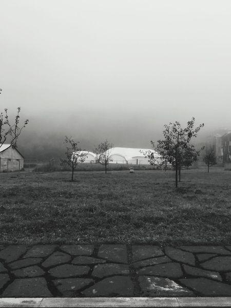 Tree Outdoors Nature Landscape Sky Fog Dilijan UWCNo People