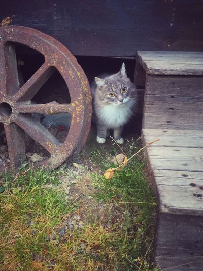 Curious Rusty Cat Domestic Cat Portrait Outdoors Day steps First Eyeem Photo