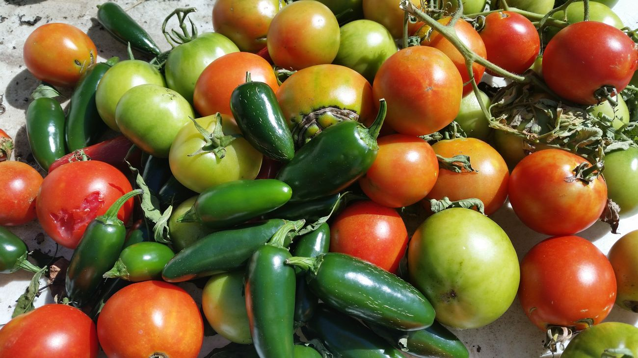 Tomatoes Red Tomatoes Green Tomatoes Jalapeños Harvesting Gardening Vegetable Summer Garden