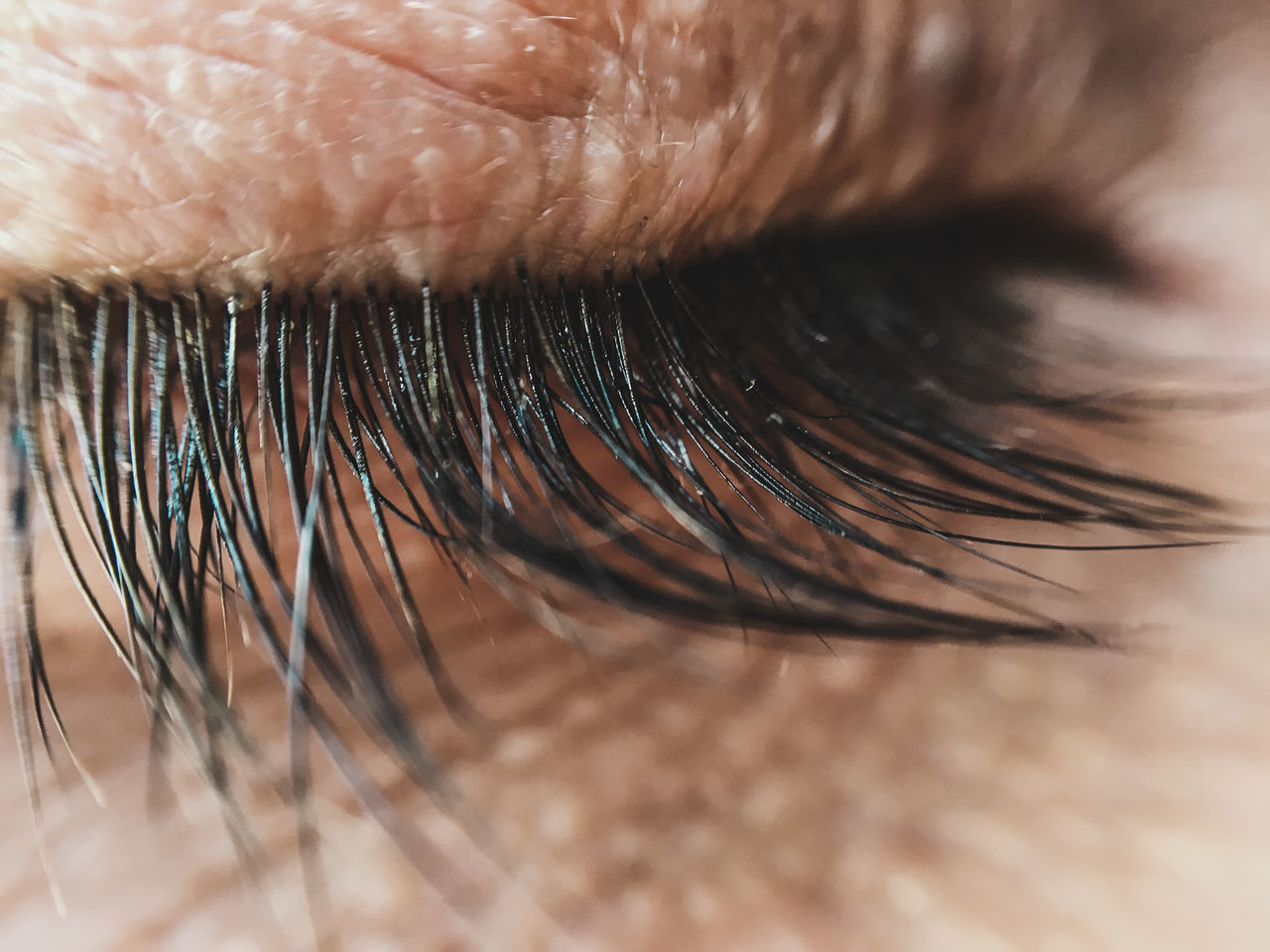 close-up, beauty, make-up, eyelash, human eye, human body part, one person, people, adult, adults only, day