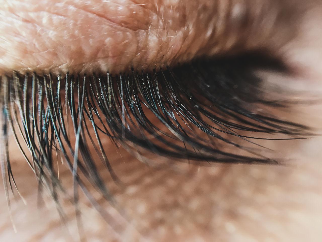 eyelash, selective focus, macro, close-up, sensory perception, human body part, full frame, eyesight, human eye, eyeball, indoors, real people, one person, day