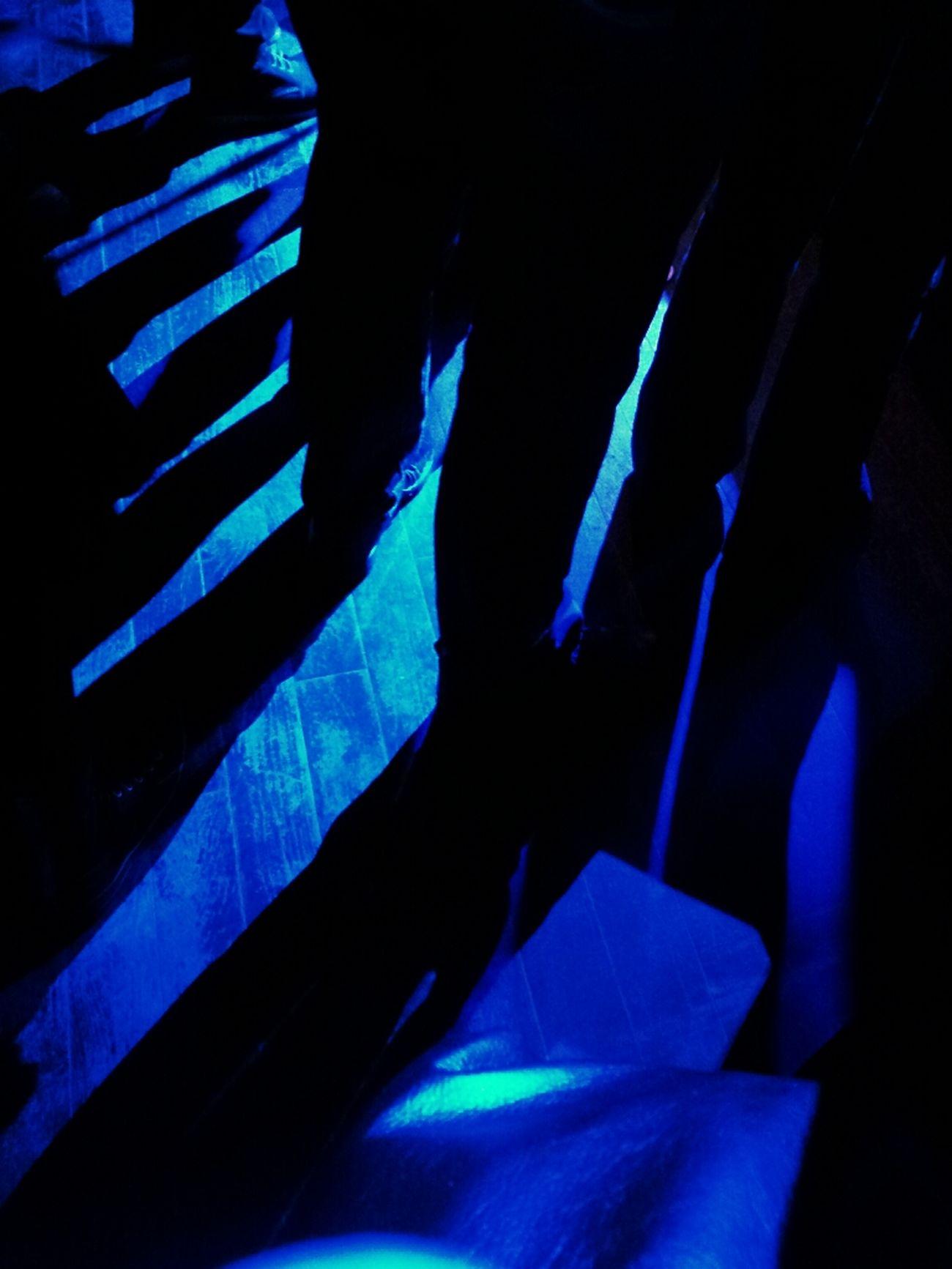 Shadows Live Music Finch